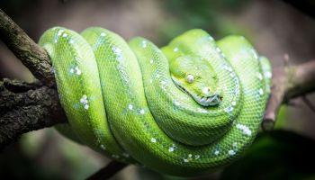 Python Schlange Zoo