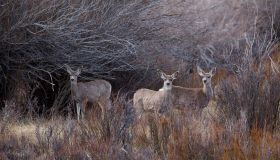 Wildlife, ranching and oil & gas interests sometimes collide on Wyoming's land