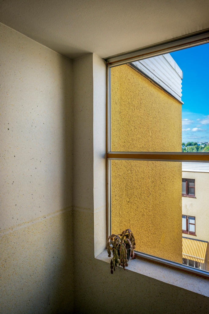 Plant in stairwell window