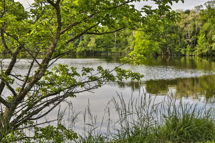 Peaceful morning at Horseshoe Lake, Shaker Heights, Ohio, USA