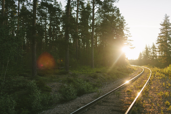 Railroad tracks along forest