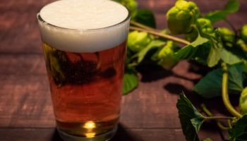 Homemade craft beer brewing: A glass of blond beer with white foam and a branch of hops with hops flowers