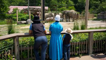 Amish Family At The Cleveland Zoo